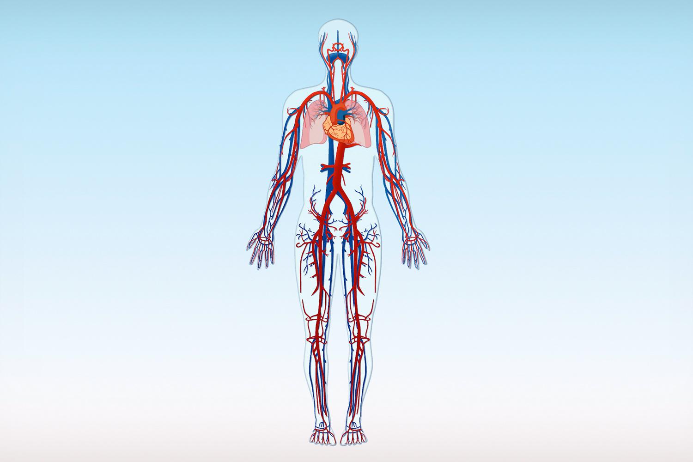 Arterien Arm